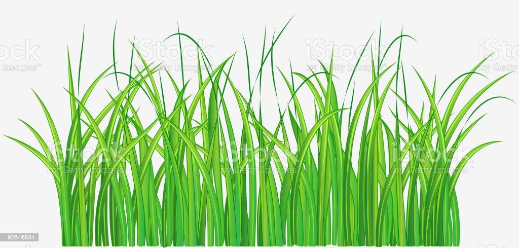 green grass design element royalty-free stock vector art