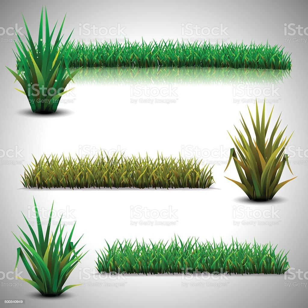 Green grass isolated vector art illustration