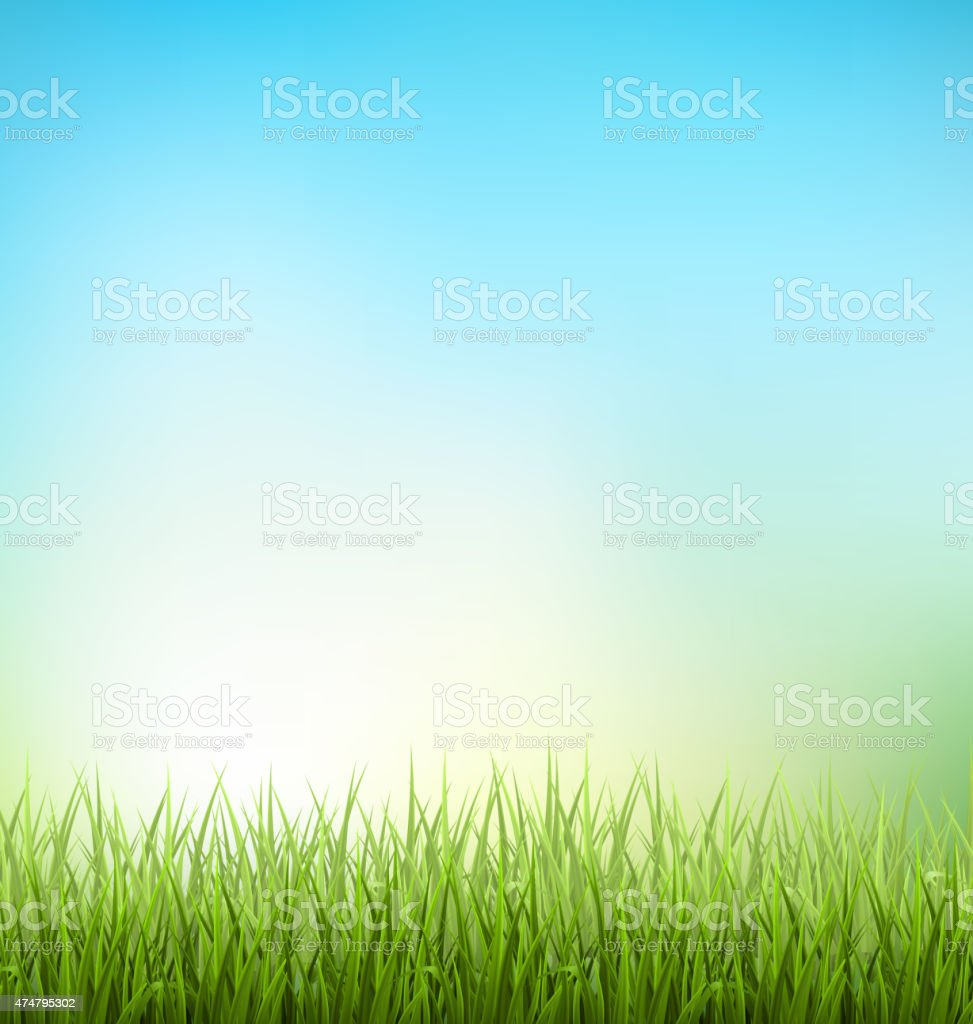 Green grass lawn with sunrise on sky. Floral nature spring vector art illustration
