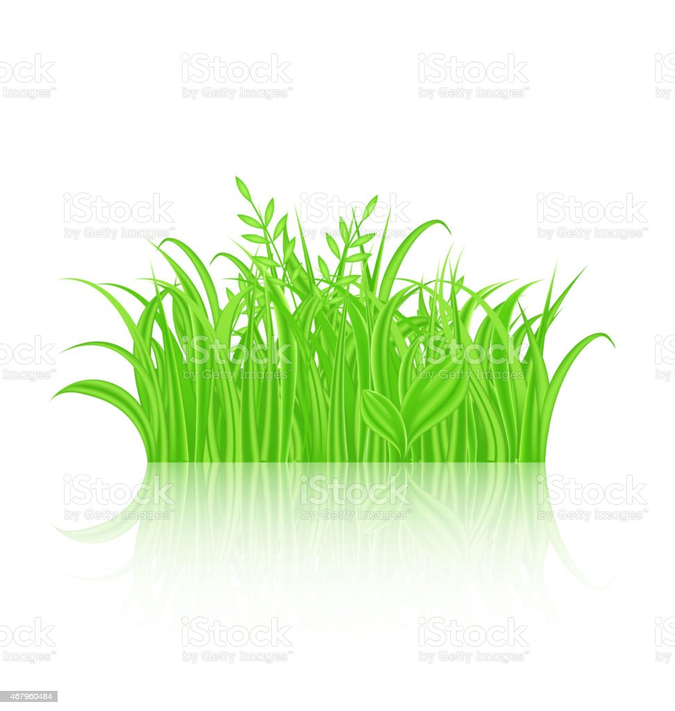 Green Grass with Reflection Isolated on White Background vector art illustration