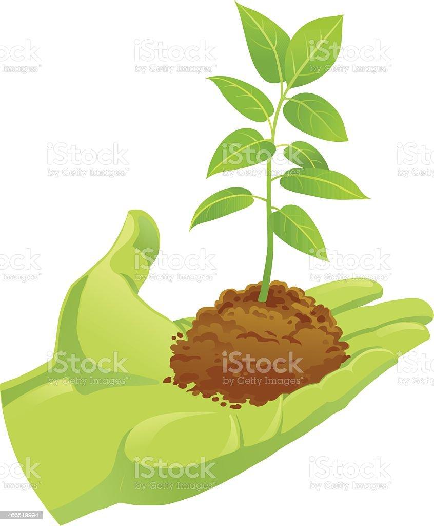 Green Hand Holding Soil With Small Seedling vector art illustration