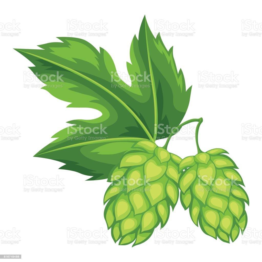 Green hops with leaf. Illustration for Oktoberfest vector art illustration