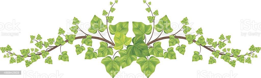 Green Ivy Vine Border stock vector art 450942503 | iStock