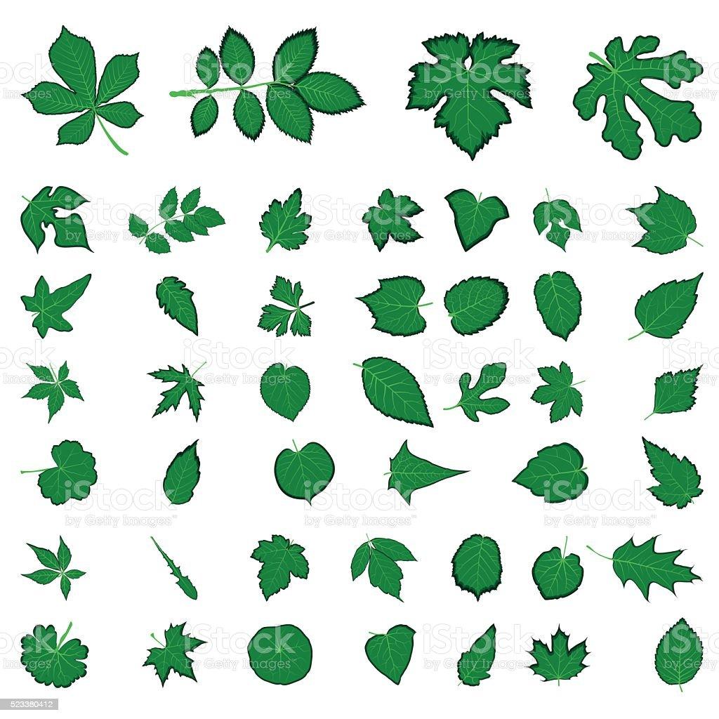 green Leaf collection, vector vector art illustration