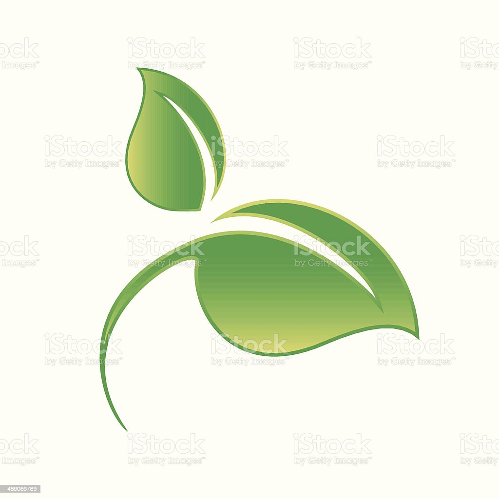 Green leaf isolated on white background vector art illustration
