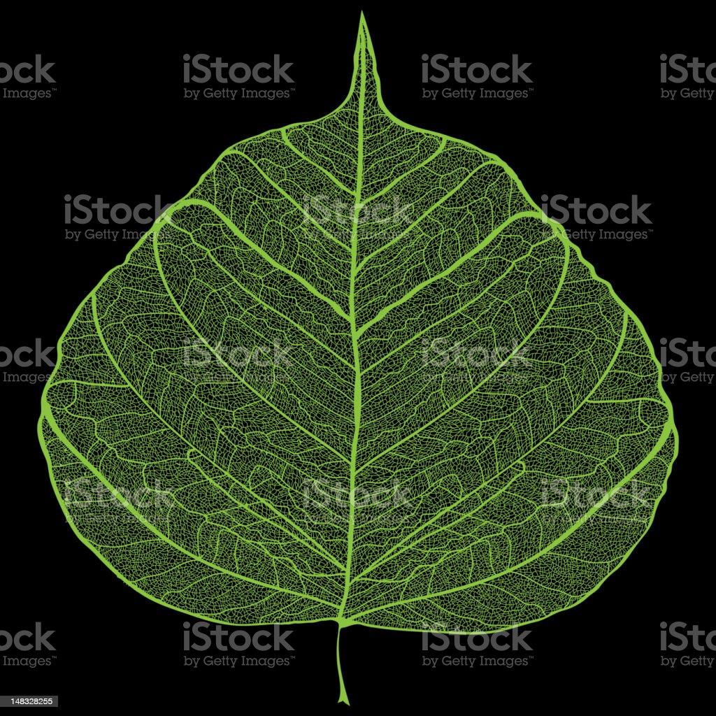 Green leaf skeleton vector art illustration