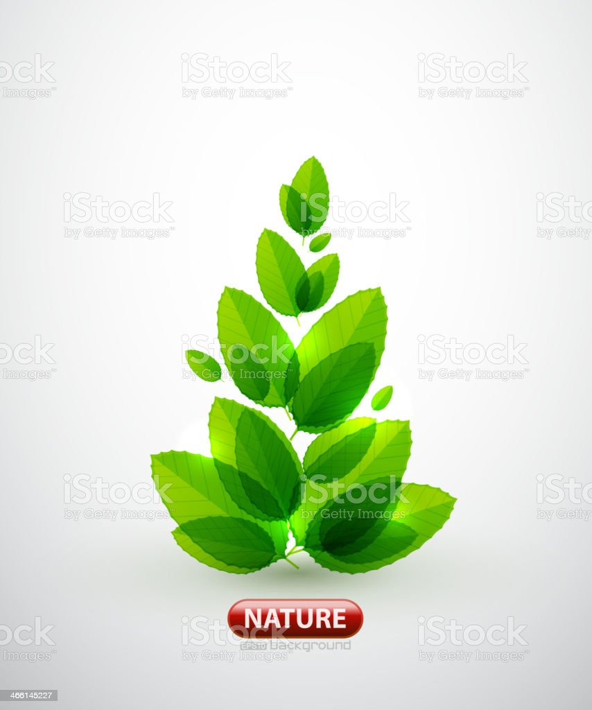 Green leaf summer tree royalty-free stock vector art