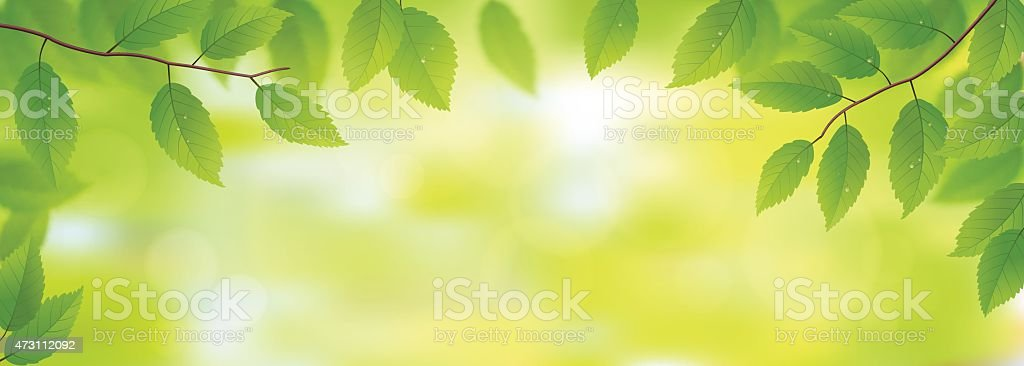 Green leaves background vector art illustration