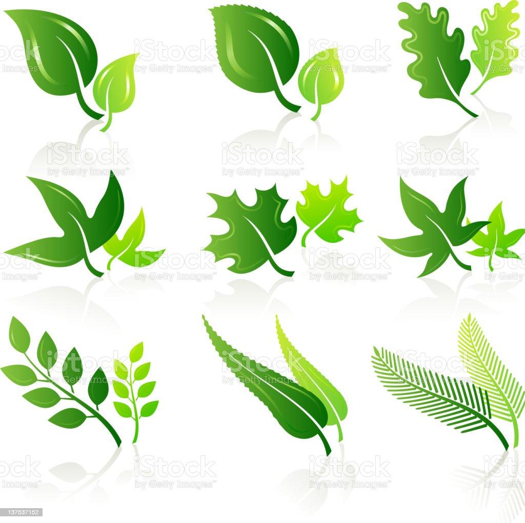 green leaves illustration set royalty-free stock vector art