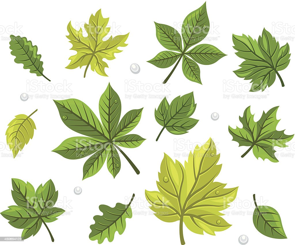 Green Leaves Set royalty-free stock vector art