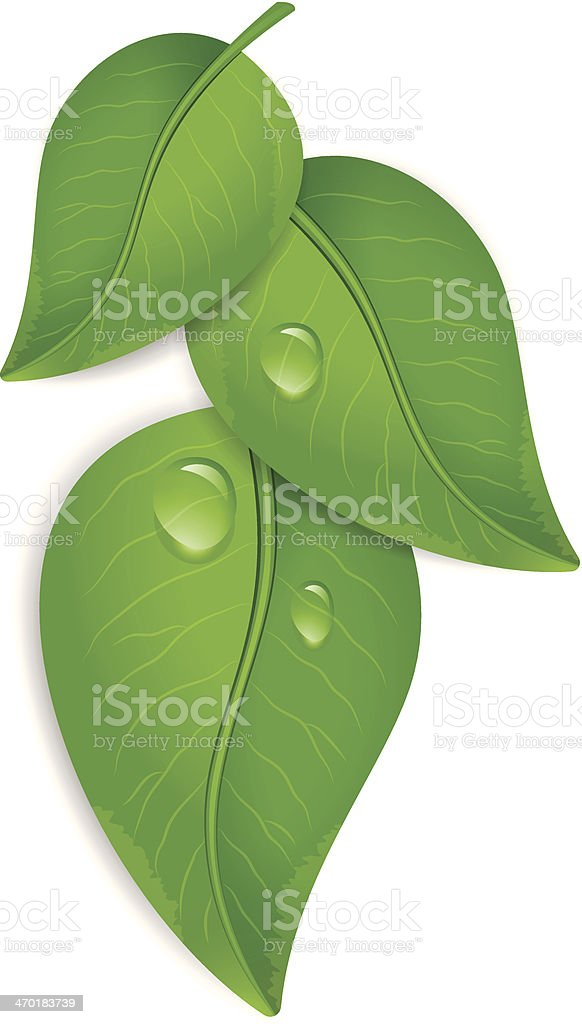 Green leaves with water drops vector art illustration