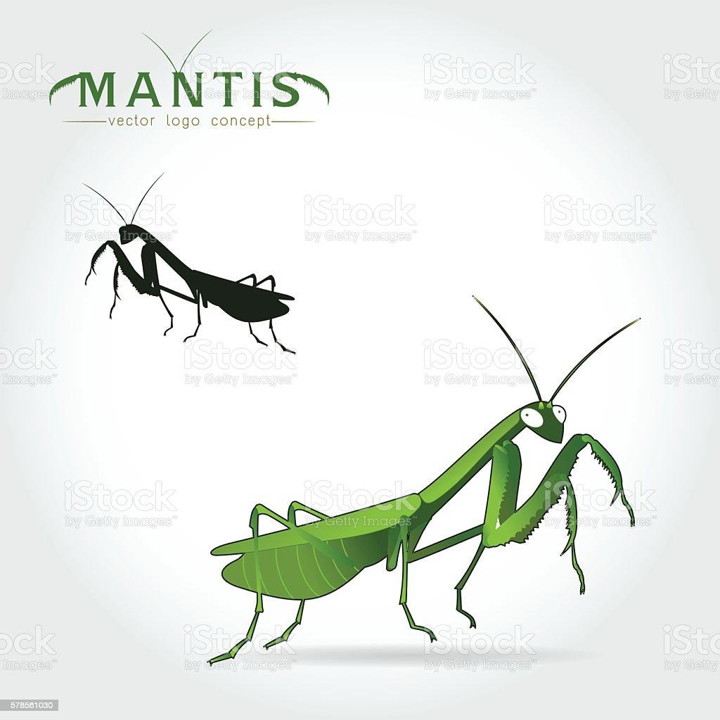 Green Mantis Vector vector art illustration