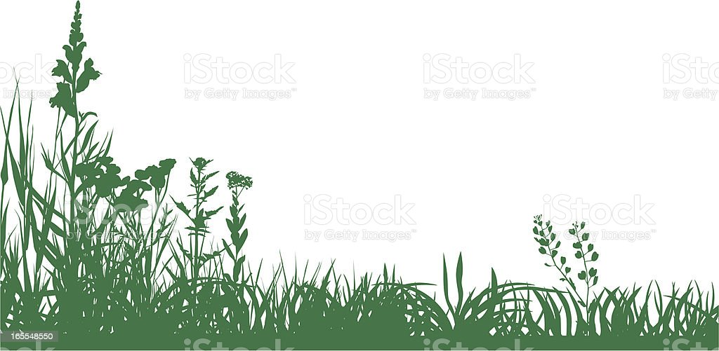 Green meadow vector art illustration