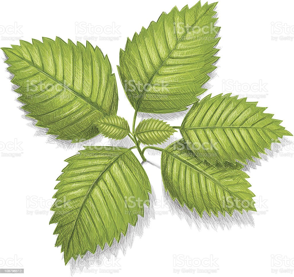 green mint leafs royalty-free stock vector art