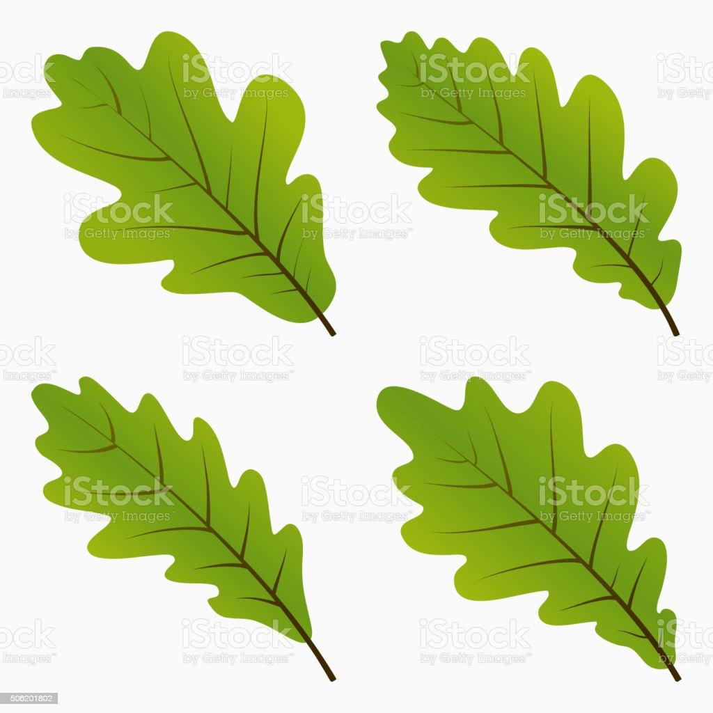 English Oak Clip Art, Vector Images & Illustrations - iStock