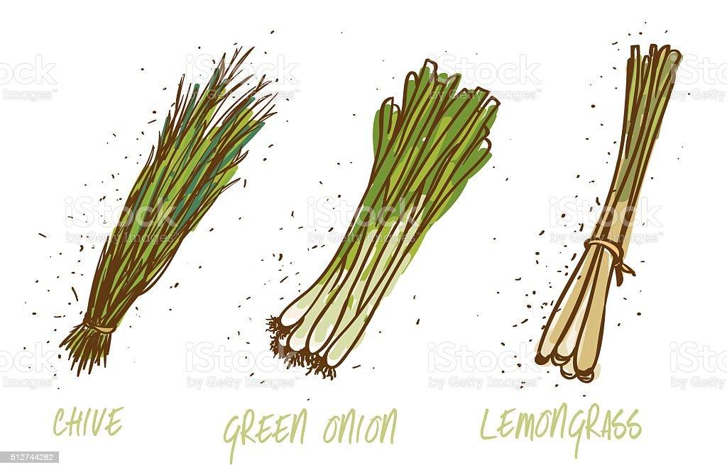 green onions, chive and lemongrass on white vector art illustration
