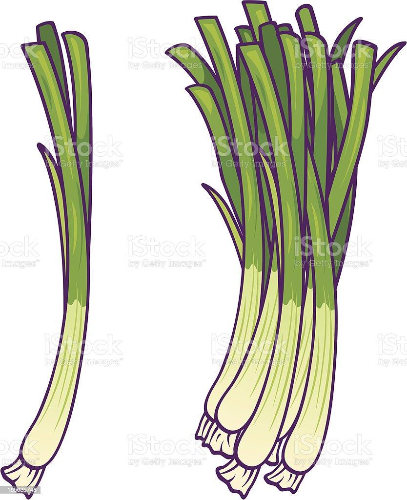 Green Onions vector art illustration