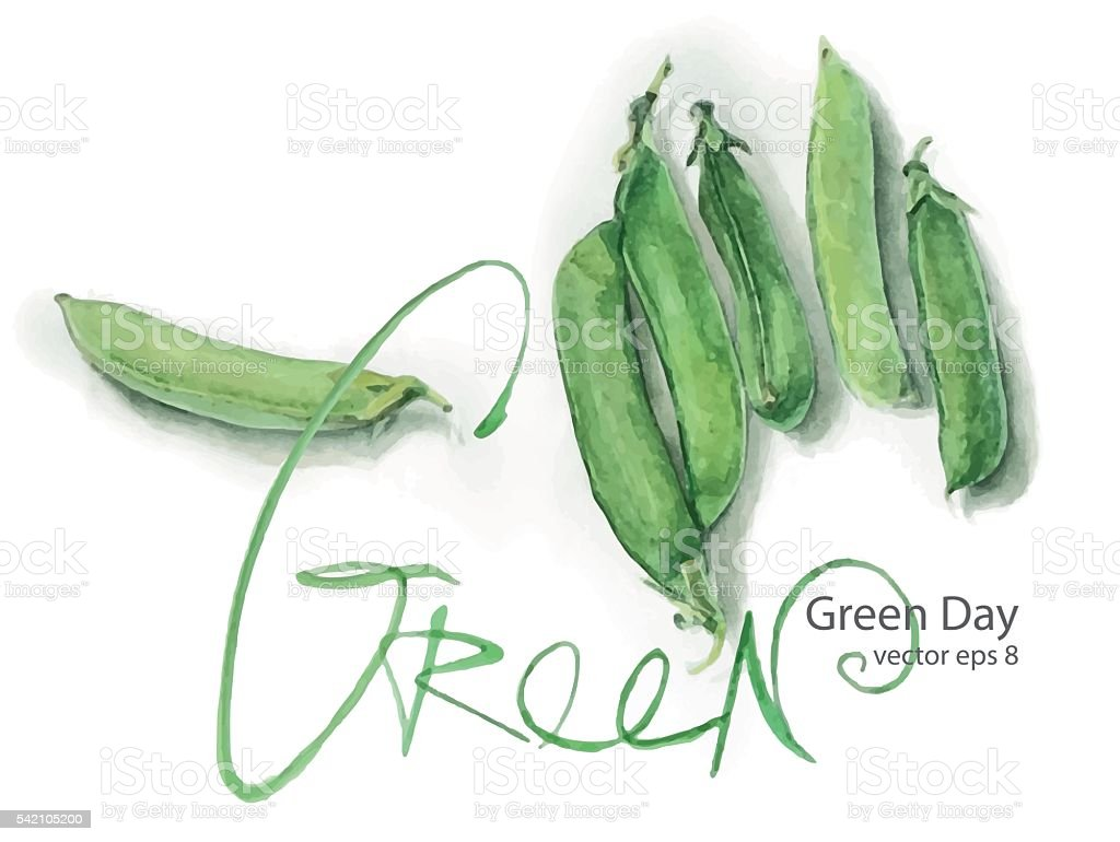 Green pea vector art illustration
