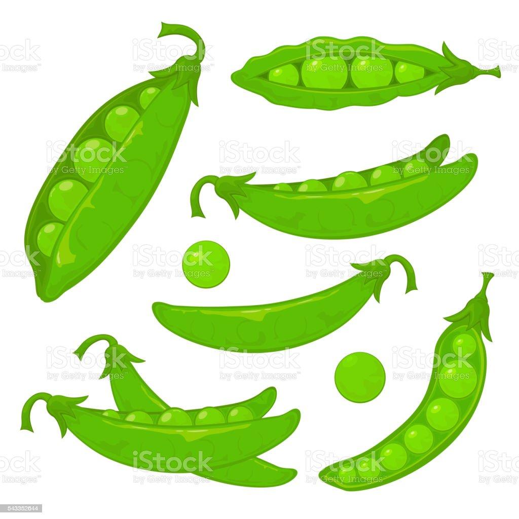 Green peas vector art illustration