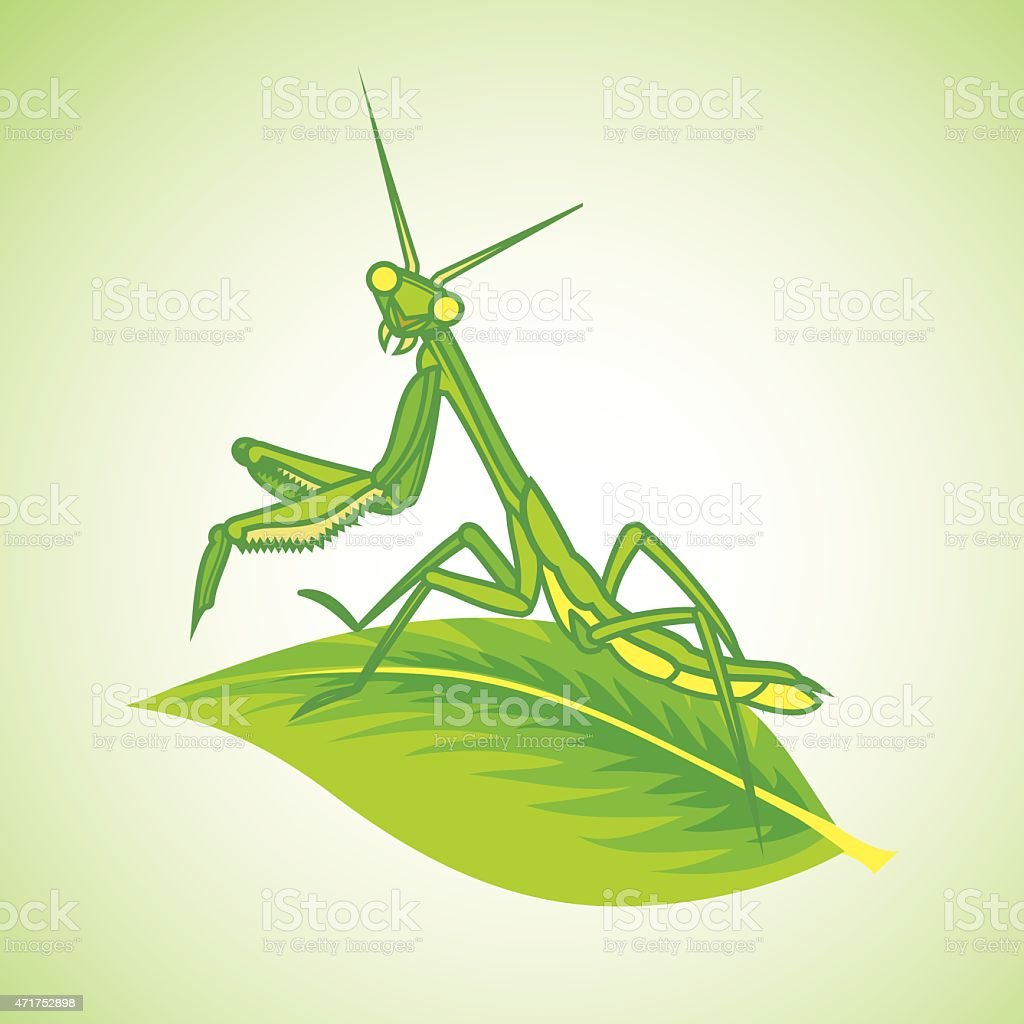 Green Praying Mantis vector art illustration