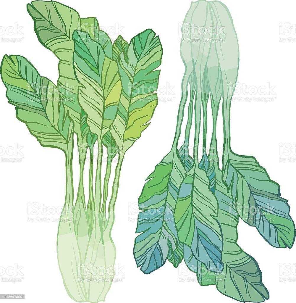 Green salad vector art illustration