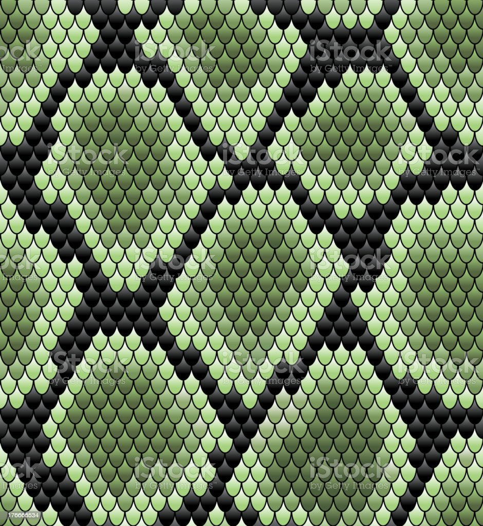 Green seamless snake skin pattern vector art illustration