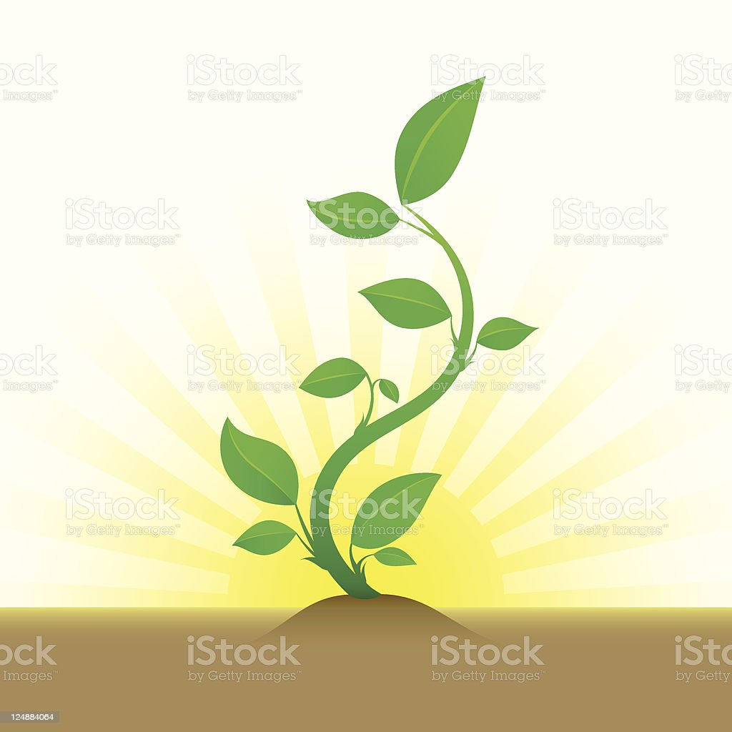 Green Sprout Growing From Soil vector art illustration