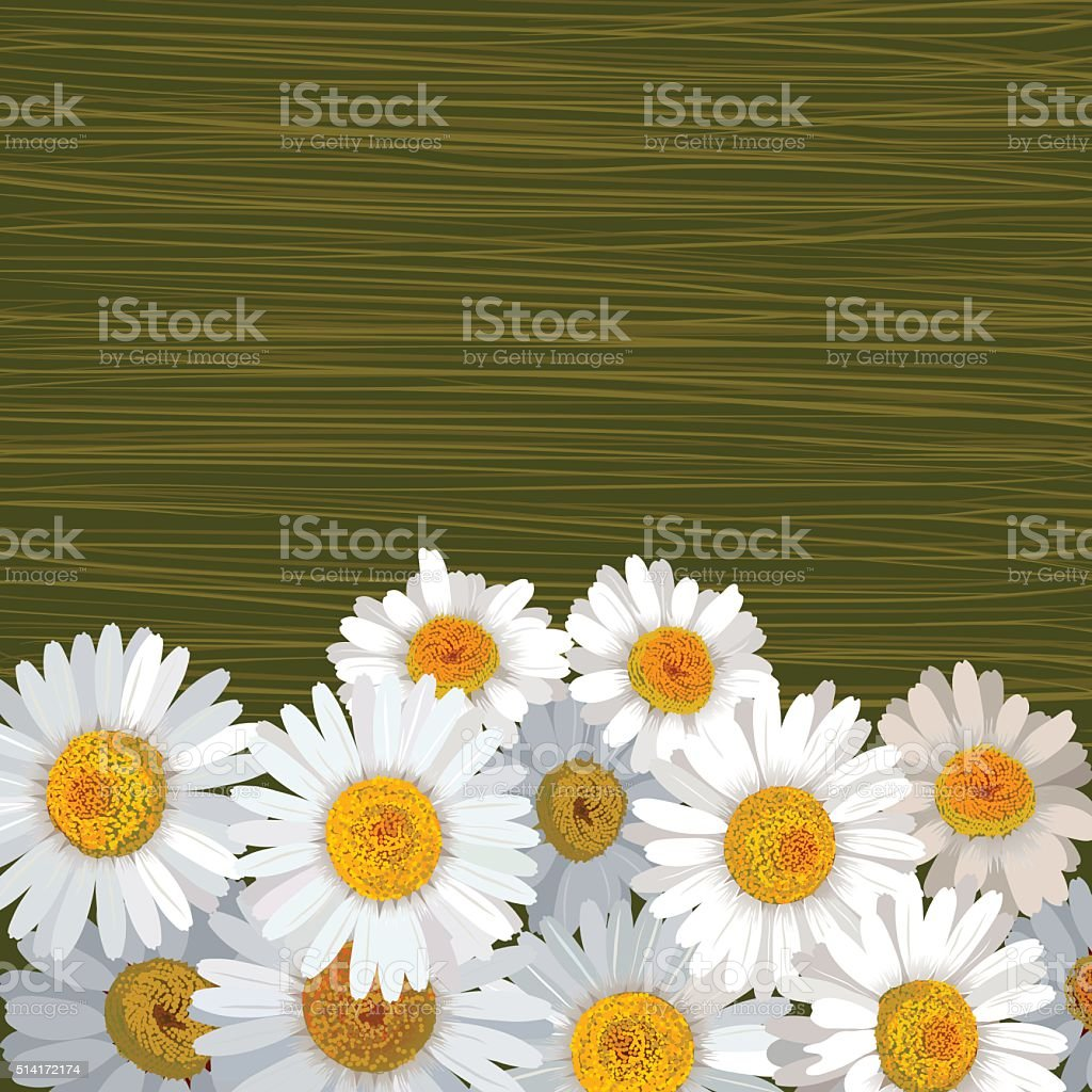 Green striped background with many flowers of camomile vector art illustration