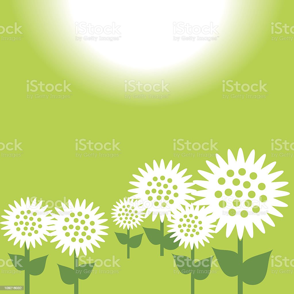 Green sunflowers royalty-free stock vector art