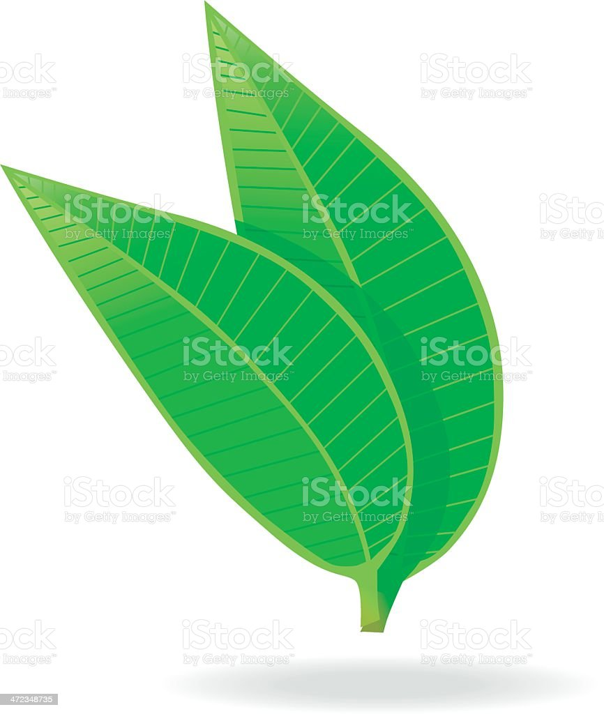 green Tea Leafs. vector art illustration