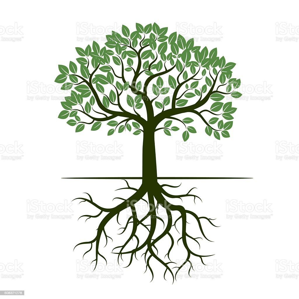 Green Tree and Roots. Vector Illustration. vector art illustration