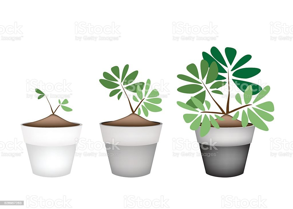 Green Trees and Plants in Ceramic Flower Pots vector art illustration