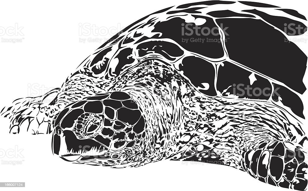 Green Turtle illustration B&W royalty-free stock vector art