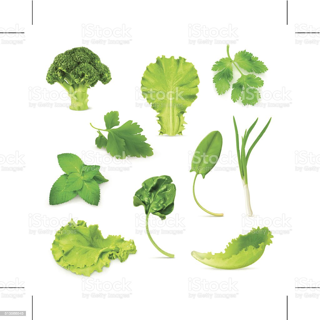 Green vegetables and herbs set vector art illustration
