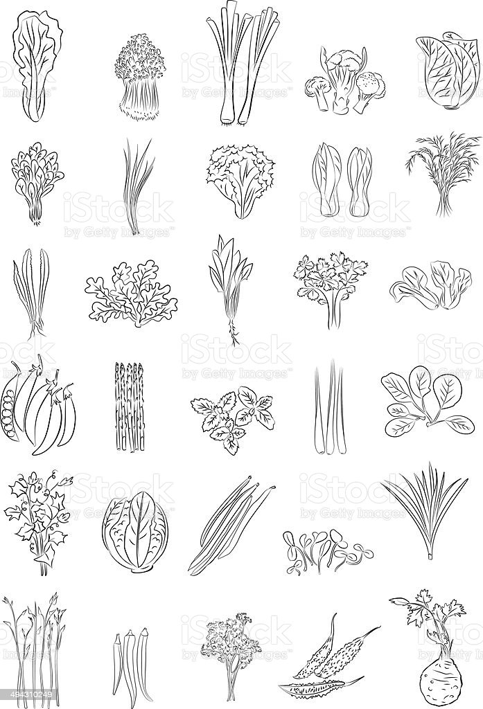 Green Vegetables vector art illustration