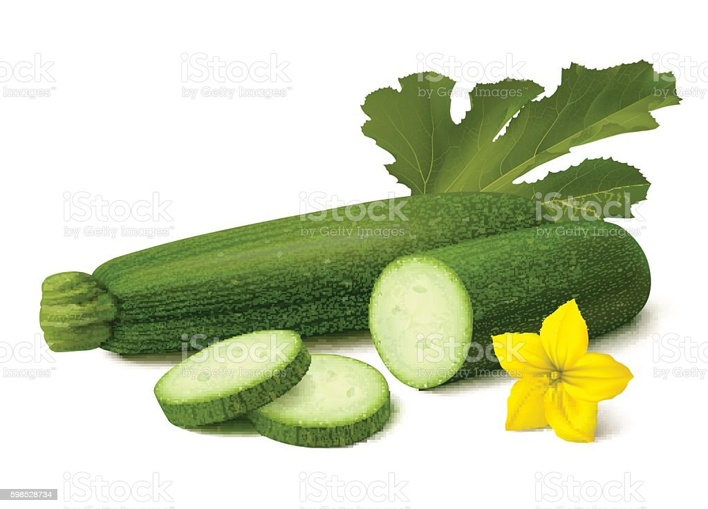 Green zucchini on white background vector art illustration