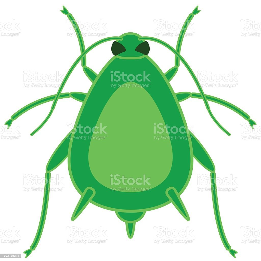 Greenfly insect icon vector art illustration