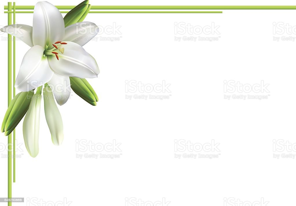 Greeting card with white lilies vector art illustration