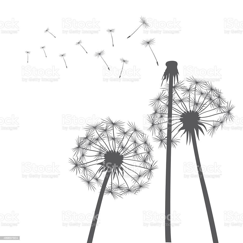 Grey vector dandelions vector art illustration