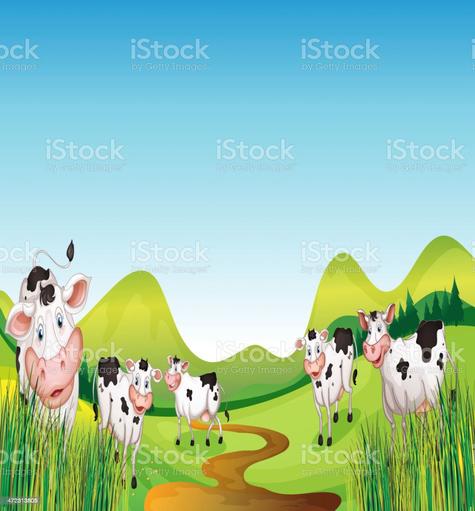 Group of cows royalty-free stock vector art