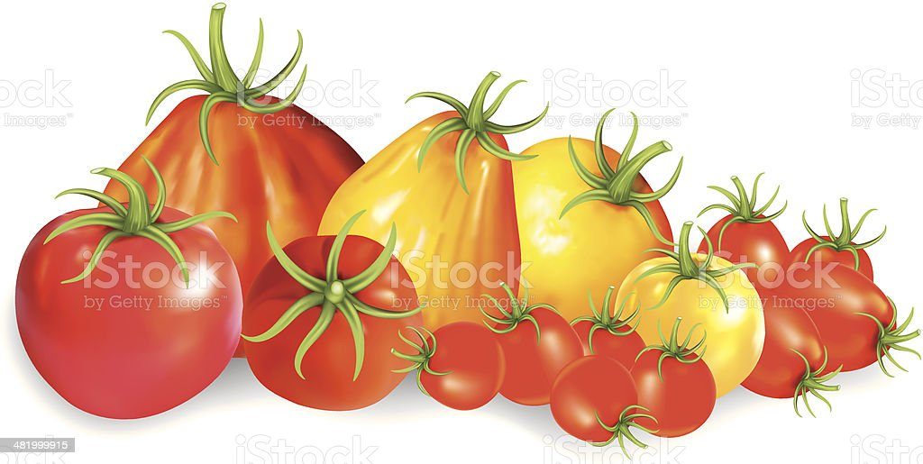 Group Of Heirloom Tomatoes vector art illustration