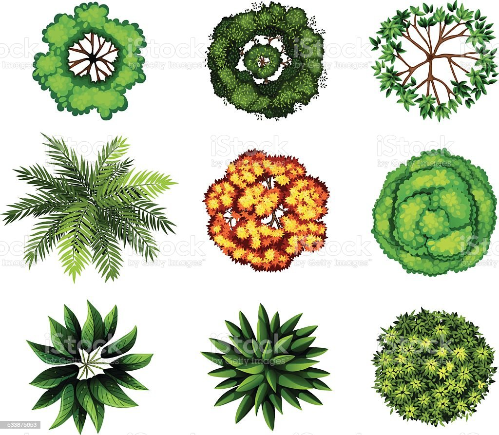 Group of plants vector art illustration