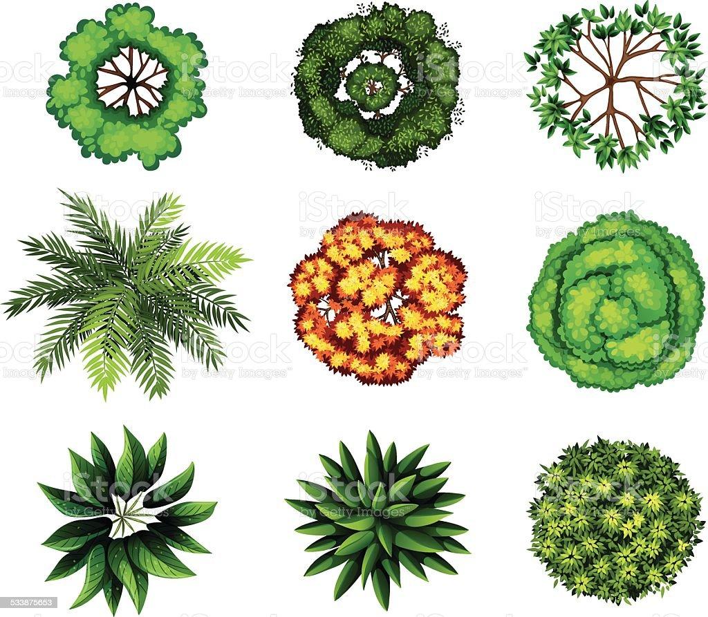 Group of plants vector art illustration
