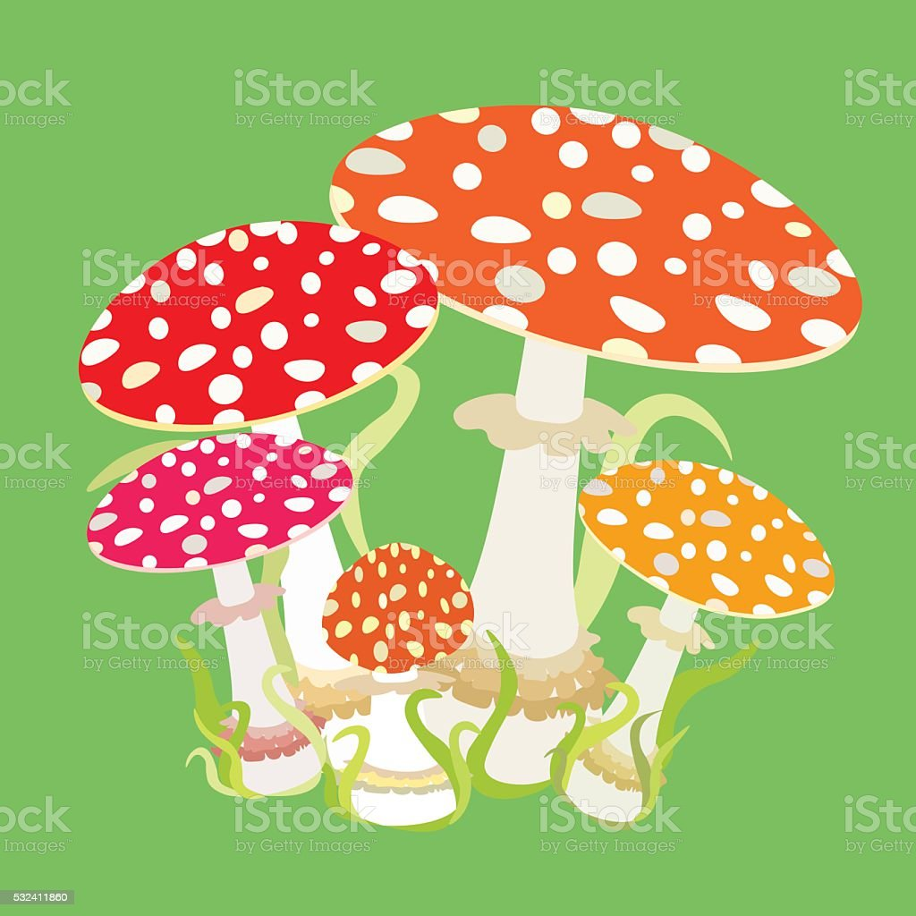 group with fly agaric, Amanita muscaria. vector illustration vector art illustration