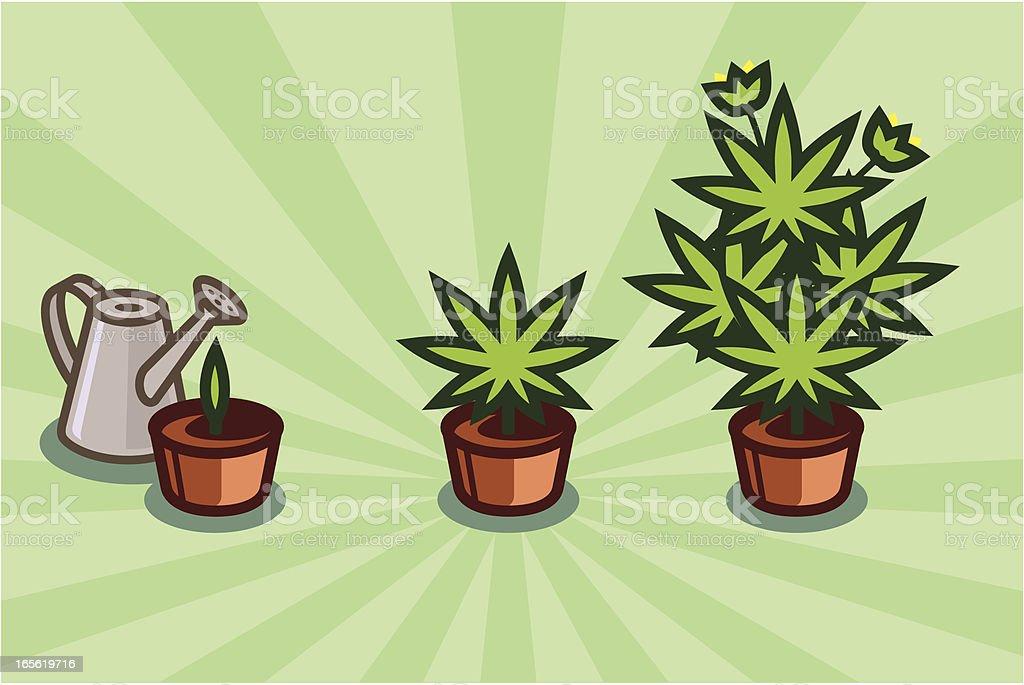 Growing grass royalty-free stock vector art