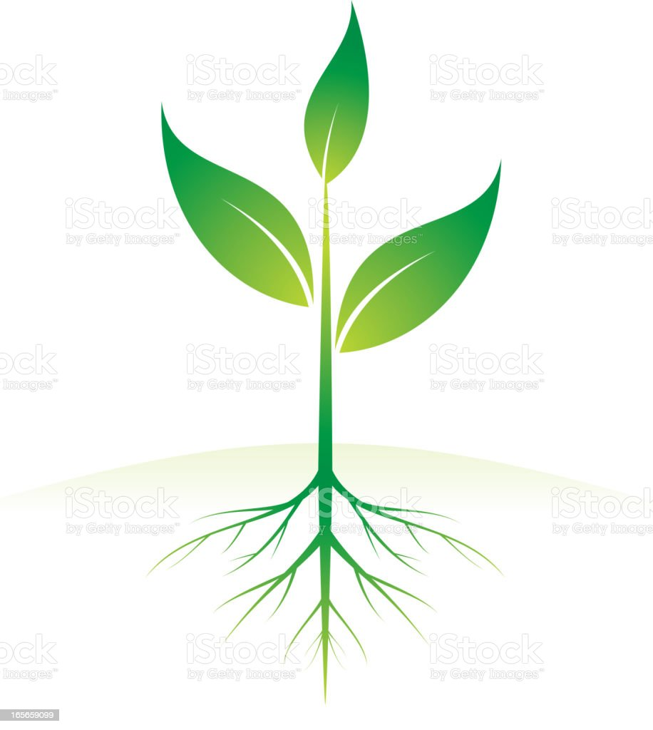 growing plant vector art illustration