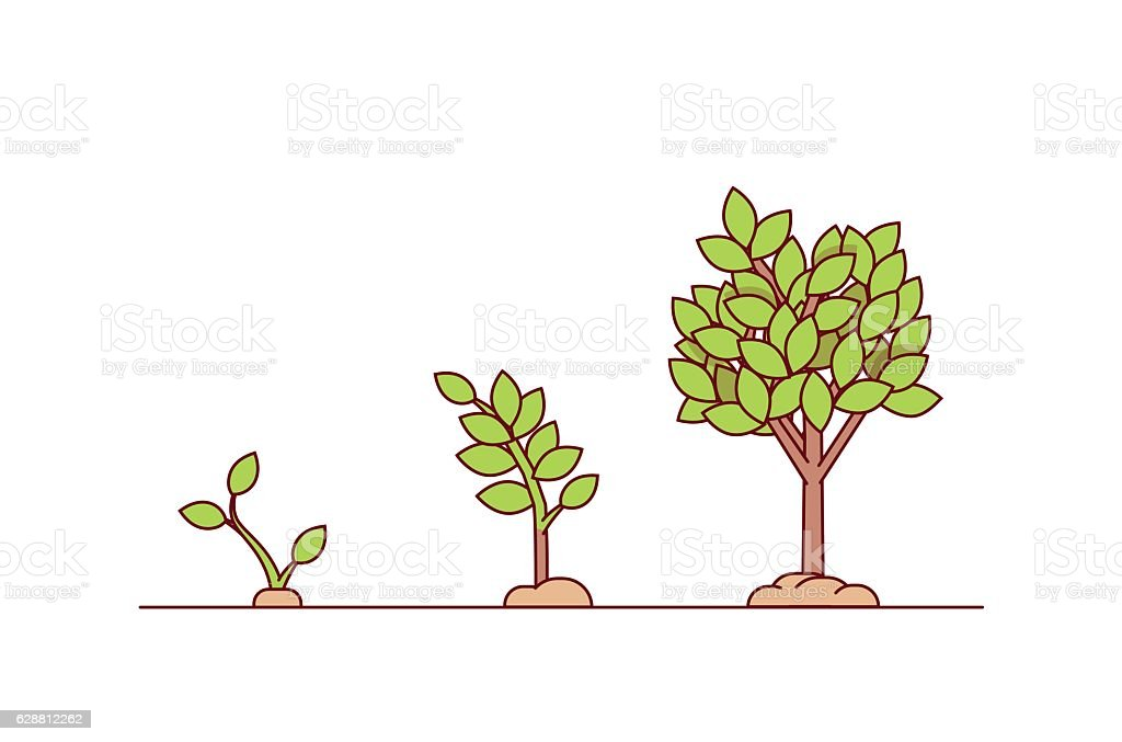 Growing tree seed with green leafs vector art illustration