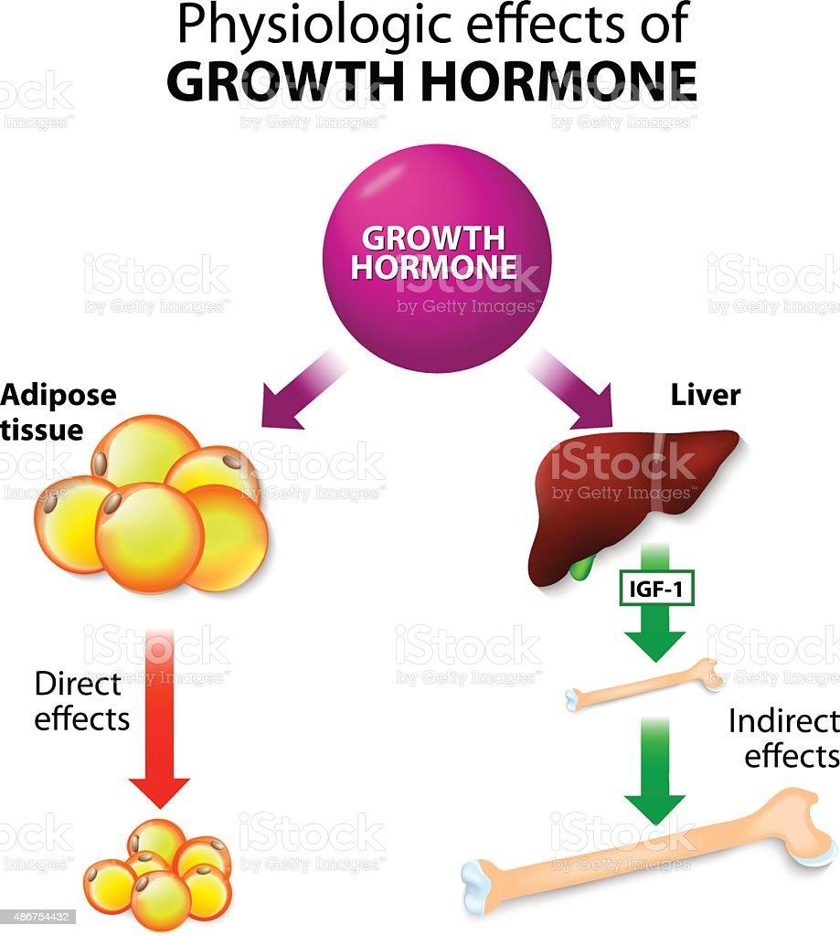 Growth hormone or somatotropin or somatropin vector art illustration