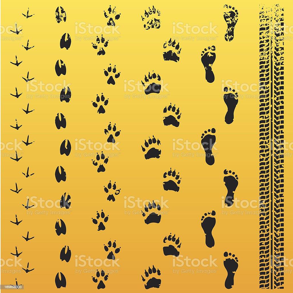 Grunge Animal Track Evolution vector art illustration