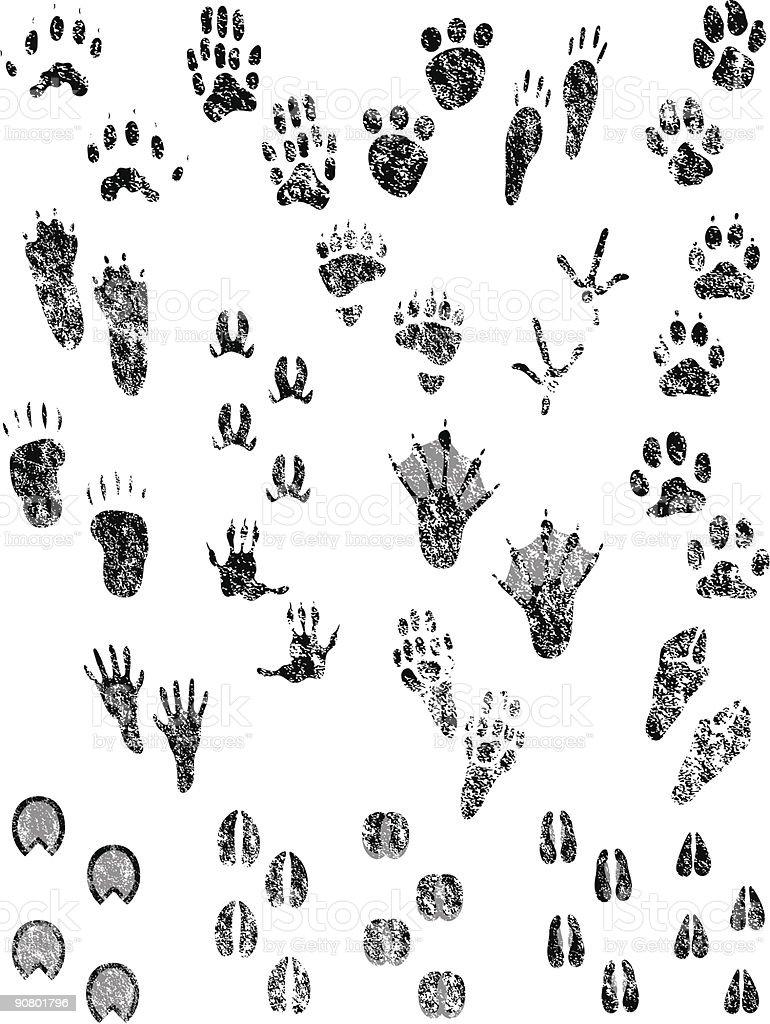 Grunge Animal Tracks vector art illustration